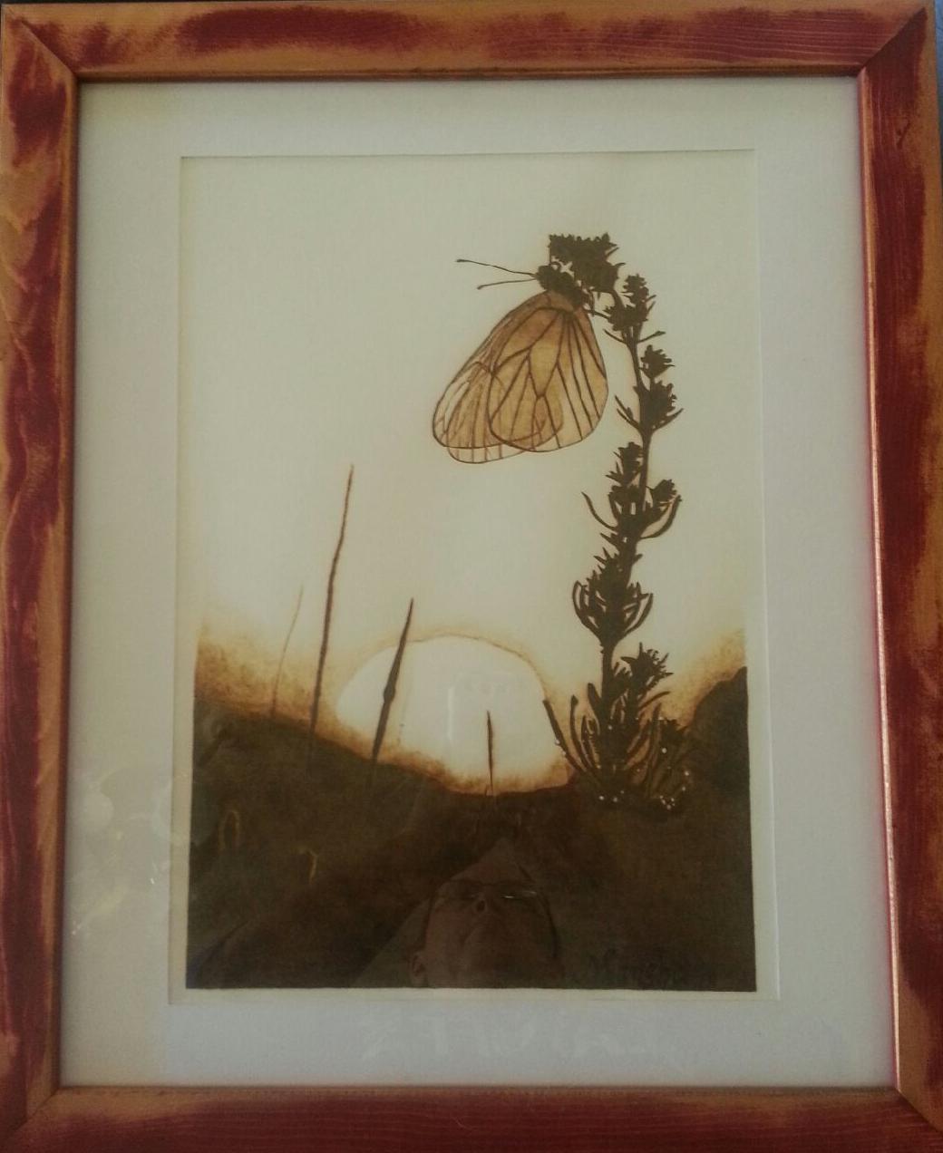 butterfly-sunrise-2