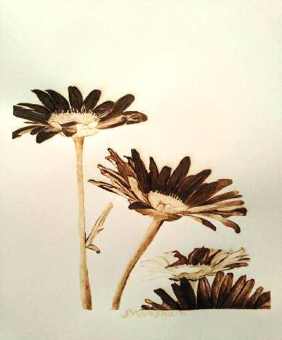 Daisies burned on paper