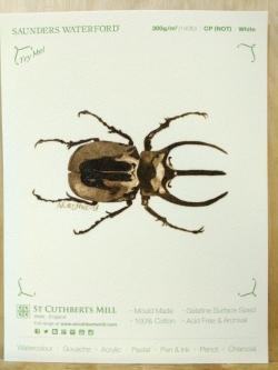 Chalcosoma atlas