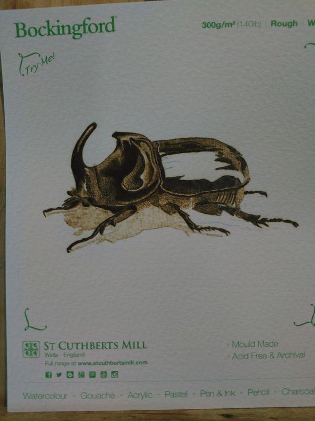 Single beetle on paper